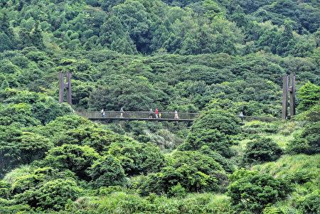 近期逐步解封,陽明山國家公園的菁山吊橋可見遊客散步踏青。