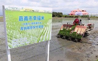 「幸福嘉義米」插秧首發 量產10噸品牌米