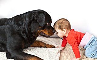 妈妈心里暖洋洋 宝宝和罗威纳犬成好朋友
