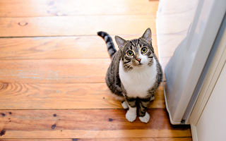 宠物猫落跑 野外生存近两个月