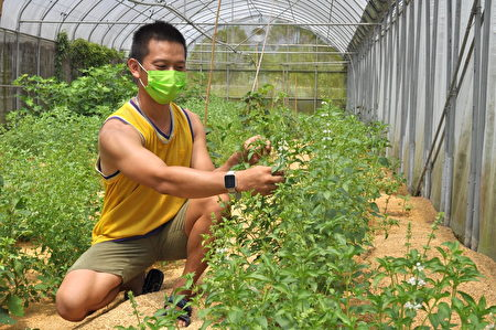 百大青农陈帅之运用AI有机耕作,是现代化科技农民典范。