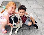 回報居民照顧 流浪狗每天護送學童過馬路