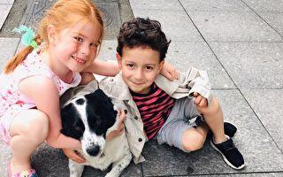 回报居民照顾 流浪狗每天护送学童过马路