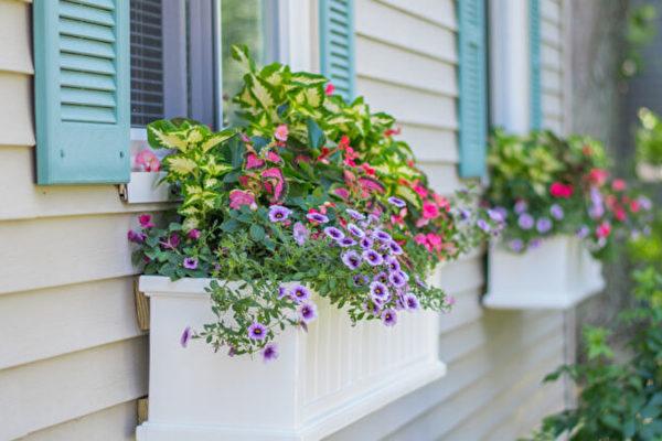 如何打造你的窗外盆栽風景