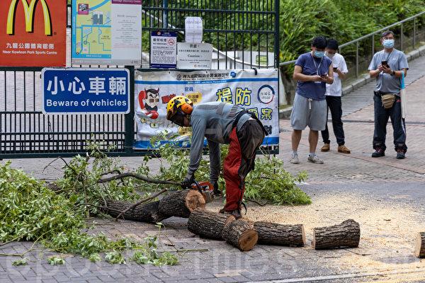 尖沙咀海防道塌樹