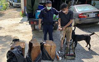 山老鼠盗采国有林木  大溪警拦截围捕查获