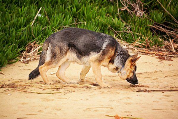 还是狗鼻子灵 美国警犬找到女子遗失的戒指