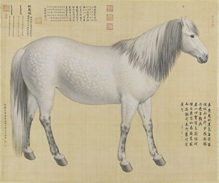故宮南院自7月30日起推出「遠方的戰爭─清宮銅版戰圖展」,展出清 郎世寧〈畫十駿圖〉如意驄。
