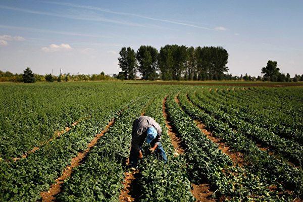 确保粮食不受中共控制 美拟立法禁中企购买农地