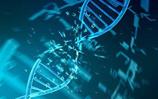 研究:某些病毒DNA內發現第五種鹼基