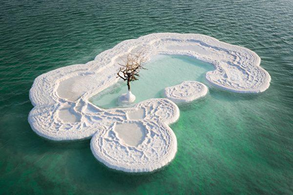 大自然的奇迹? 一棵树矗立在死海的盐岛上