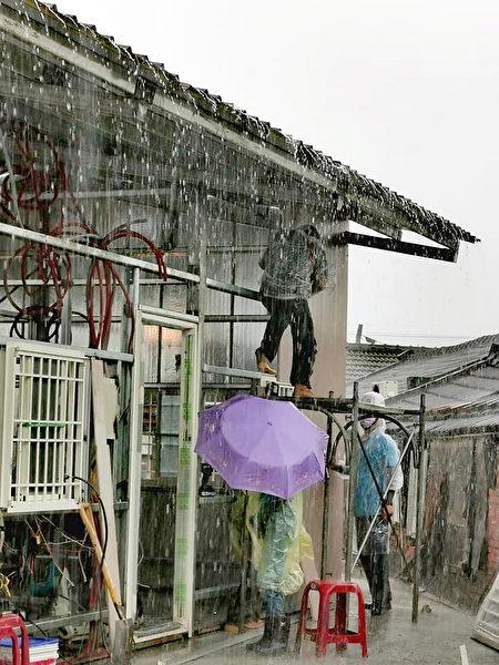台湾希望义工团为云林县郑小妹一家兴建新房,1日冒雨赶工,搭建房屋的钢骨架构和屋顶。