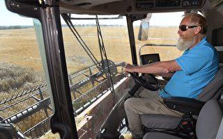 冬季作物豐收 乏人收割澳農業籲引進4千高薪熟練技工