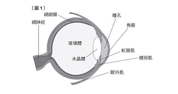 眼睛的构造就像一台精密的仪器。(三采文化提供)
