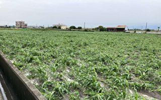 西南氣流豪雨致災 雲林農損達872萬元