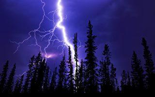雷神發威? 美國200歲松樹被閃電劈成兩半