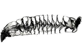 鲨鱼肠道结构用了发明家特斯拉的专利设计
