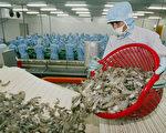中共以虾感染为由拒接收千个集装箱 印度抗议