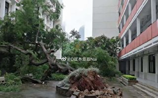 颱風「盧碧」轉向 避開台灣 兩次登陸粵閩