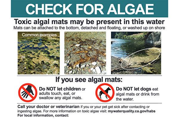 加州警告索诺玛县水域毒藻泛滥