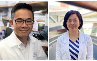 UCLA兩教授研發早期檢測孕婦胎盤植入風險技術