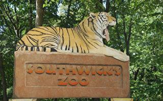 麻州一動物園誕生「超重」長頸鹿