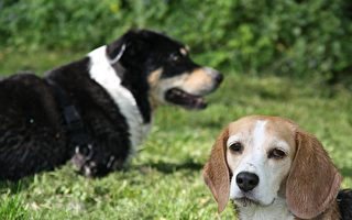 印度雙犬大戰毒蛇2小時 犧牲自己保護主人