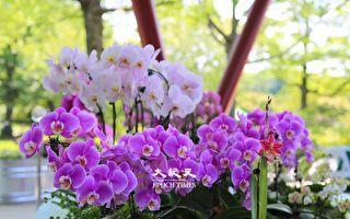 皇后區植物園台灣蘭花展  13~15日連展三天
