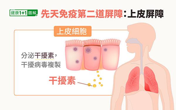 免疫系統第二道屏障:上皮細胞。(健康1+1/大紀元)