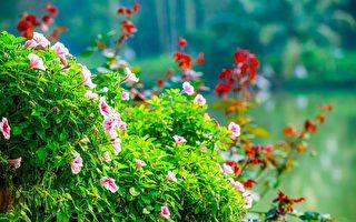 新西兰最好的春季花园之旅指南 请查收
