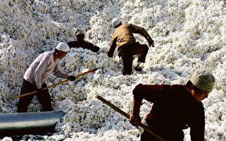 美國智庫:新疆棉花番茄等仍由中間商銷往全球