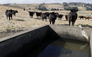 加州乾旱至地下水枯竭 更多井不再出水