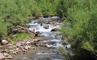 美國這條小河的河水 每15分鐘才出現一次