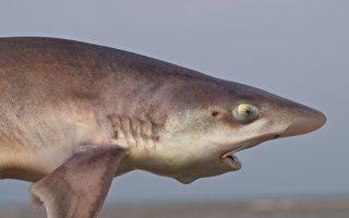 """鱼缸里都是雌鱼 """"女儿国""""竟有小鲨鱼出生"""
