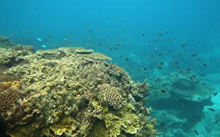 澳洲大堡礁惊现400岁罕见巨型珊瑚
