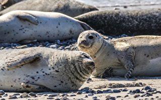 這處沿海地區違規少了 但晒太陽的海豹還在
