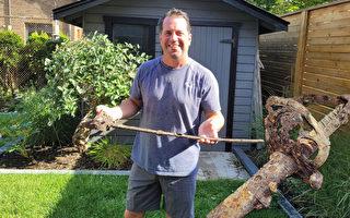 後院建露台 加國男竟挖出一把「神祕」軍劍