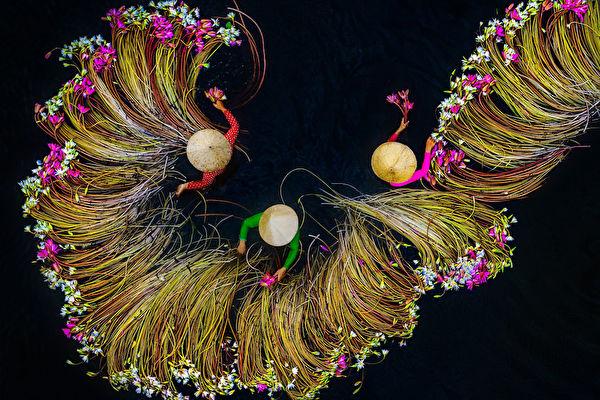 組圖:空拍越南婦女湄公河採睡蓮