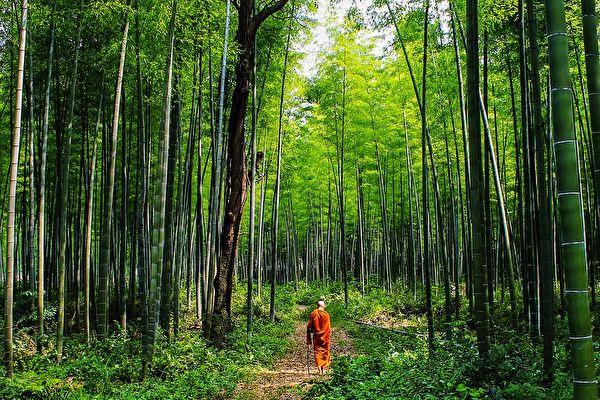 竹林(pixabay)