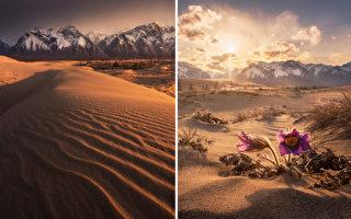 組圖:奇特的查拉沙漠 被山林湖泊所環繞