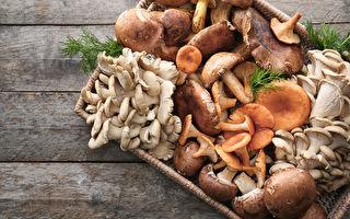 乾蘑菇與鮮蘑菇 想做的料理用哪種菇好?