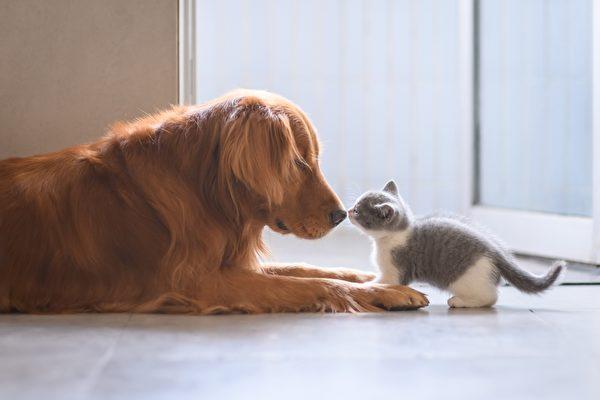 小貓在門口擋人 小狗奉主人之命把牠拖走