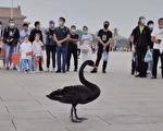 周曉輝:黑天鵝降落天安門廣場 危機將至?
