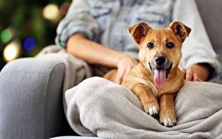 狗狗也需要穴道按摩 在家就能做的身體保健
