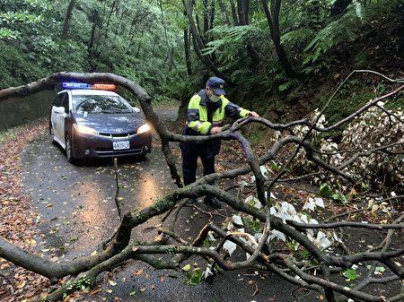 路樹不堪強風吹襲傾倒於路中。