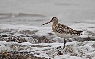一只鸟儿沮丧的新西兰之旅 引众多网友关注