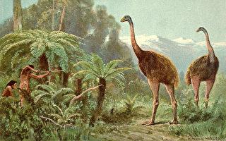南地恐鳥骨頭被偷 警方呼籲知情者提供信息