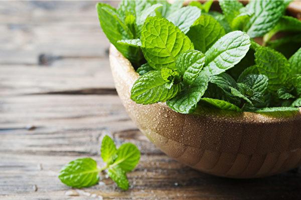 薄荷是一味辛凉解表中药,外用还能杀菌止痛。(Shutterstock)