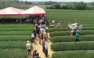 茶改場推廣茶園機械作業  紓緩缺工問題