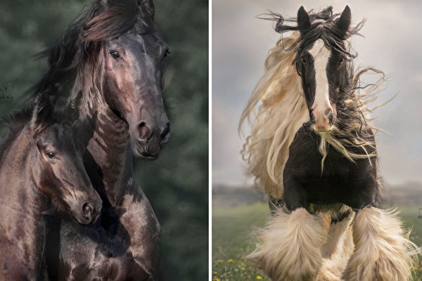 组图:奔跑中的骏马展现力量和自由